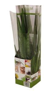homemeetsnature - Kamerplanten